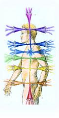 el ser humano es multidimensional los siete cuerpos
